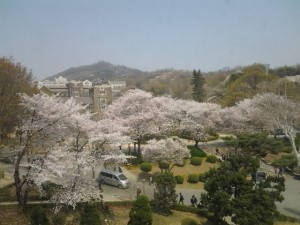 1 Spring flowers at Yonsei